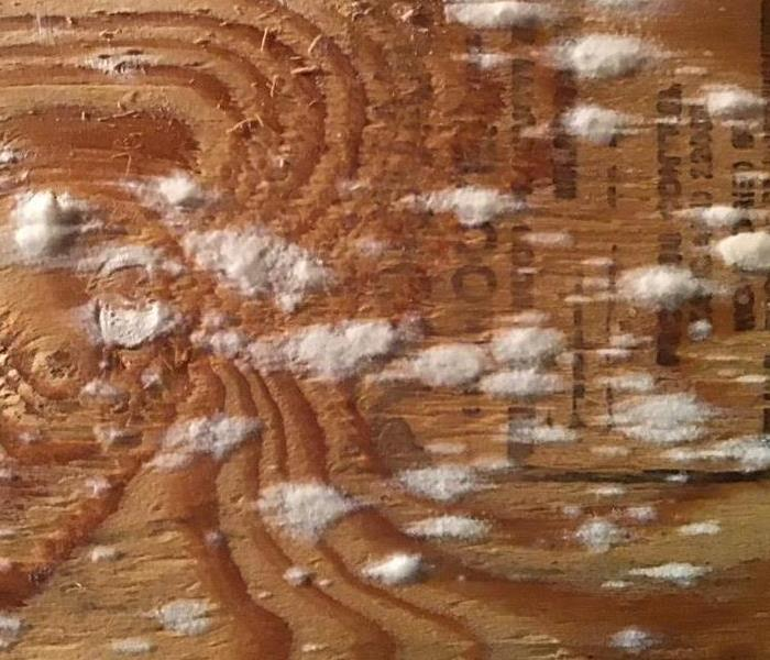 Mold on Plywood